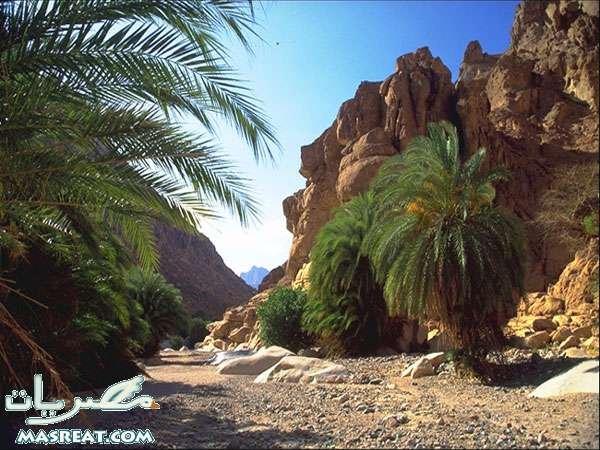 سيناء.. الفيروز